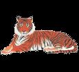 Tiger ##STADE## - coat 1340000005