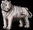 White tiger ##STADE## - coat 9