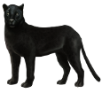 Black panther ##STADE## - coat 51